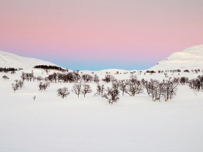 Cold Light van David Hanlon