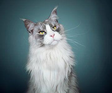 Maine Coon kat van Lotte van Alderen