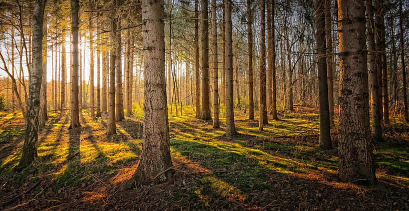 Arboreal sunset van Pascal Raymond Dorland
