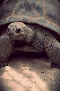 Prachtige schildpad von Tiffany Venus