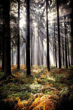 Zonnestralen in het bos van R. Maas