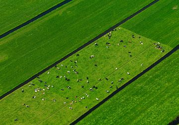 Hollands landschap met koeien van Sky Pictures Fotografie