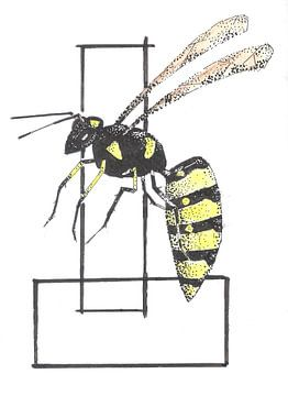 Wespe von Rob Eikenaar
