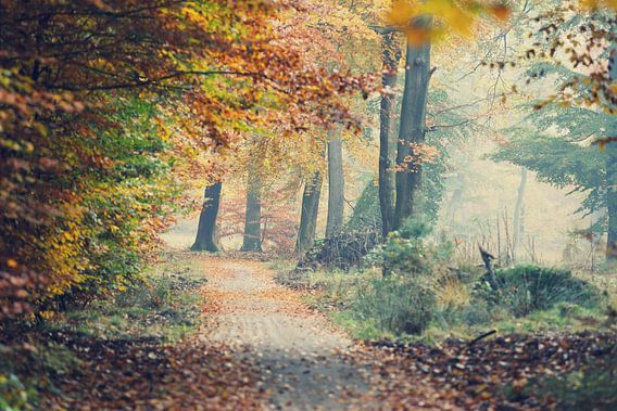 autumn in the Veluwe van Els Fonteine