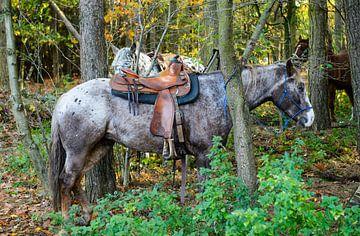 Rustende paarden van Peter Braakmann