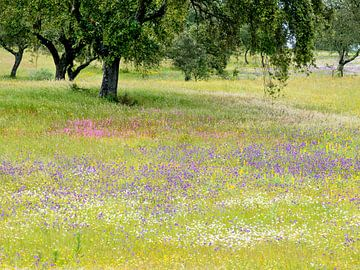 bloemenzee onder kurkeiken van Hanneke Luit
