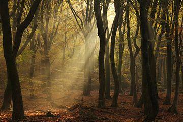 Dancing trees van Joyce Beukenex