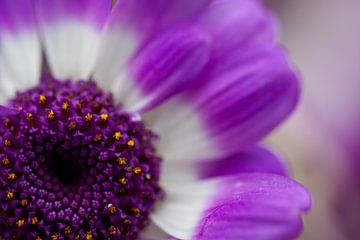Paarse bloem Purple flower von Arjan Bijker