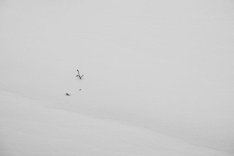 sneeuw van jan van de ven