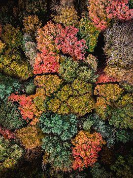 Blick auf den Wald aus der Vogelperspektive von Roos Maryne - Natuur fotografie