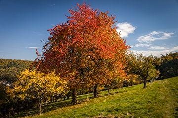 Herfst in de boomgaarden in de buurt van Engenhahn van Christian Müringer