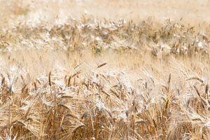 Grain field in The Netherlands von Wouter Bos