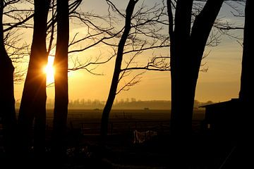 Door de bomen de zonsondergang zien