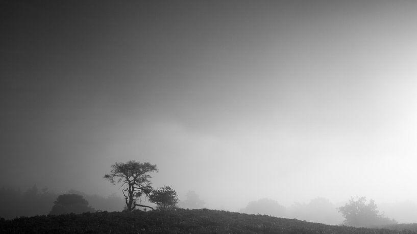 Eenzame boom op een heuvel op de Veluwe van Theo Klos