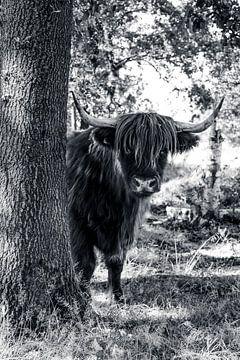 Schottischer Highlander in B&W von Laura Reedijk