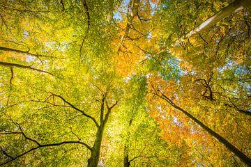Blätterdach von Denis Feiner