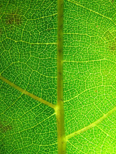 Groen macro boomblad van Vectorific Design