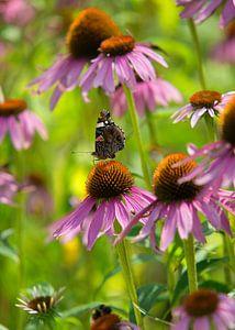 Kleurrijk Vlinderrijk