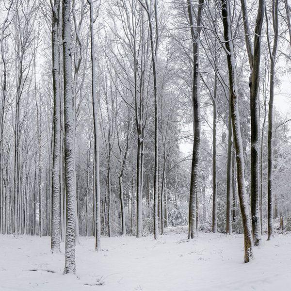 Winter in Limburg van Teun Ruijters