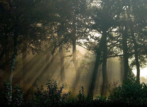 zonneharp tussen de bomen