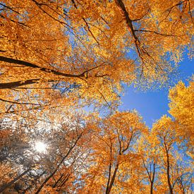 Herbst auf Texel. von Justin Sinner Pictures ( Fotograaf op Texel)