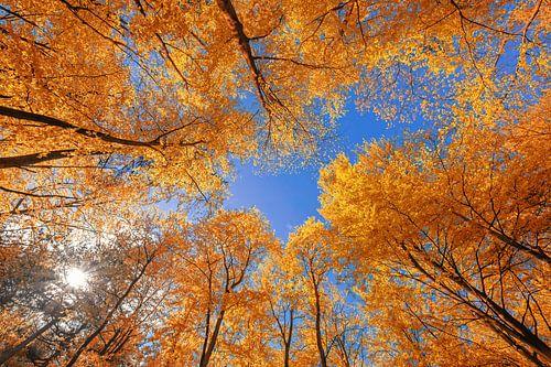 Herbst auf Texel. von