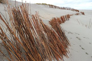 Strand Nes - Ameland van Leonie Scheers