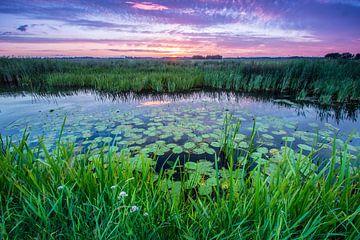 waterlelies van Martzen Fotografie
