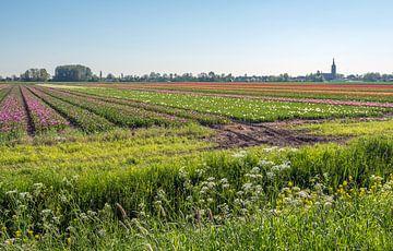 Blühende Wildpflanzen und Gräser von Ruud Morijn