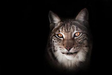 sluwe blik lynx oranje ogen van Michael Semenov