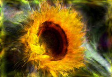 Sonnenblume abstrakt von Carla van Zomeren