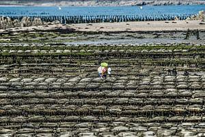 Oesterbaai nabij St Jacut de la Mer in Bretagne, Frankrijk