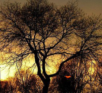 Zonsondergang van Andrea van Zwol
