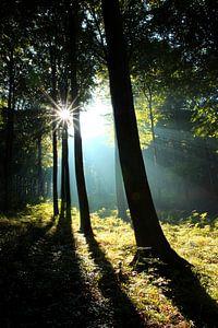 Sonnenstrahlen im Frühherbst