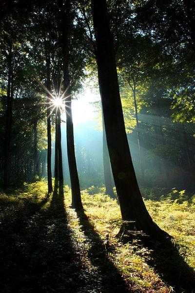 Sonnenstrahlen im Frühherbst von Ostsee Bilder