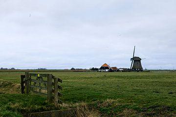 Boerenlandschap, Pettemerpolder Noord-Holland