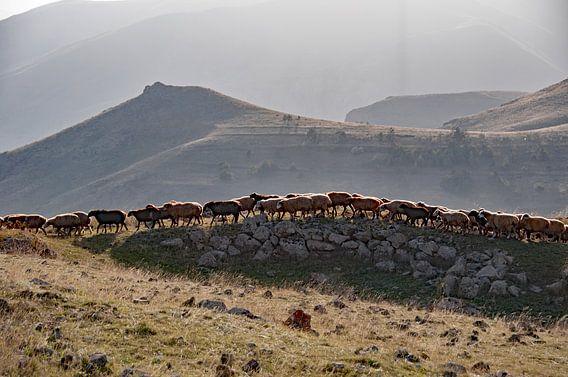Schaapskudde in de bergen van Armenië bij Zorats Karer van Anne Hana
