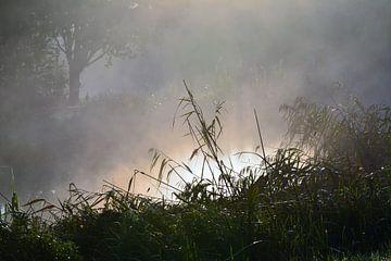 Mist van Wouter Bakker