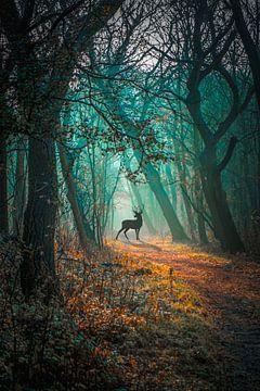 duin bos, hert van Pieter Heine