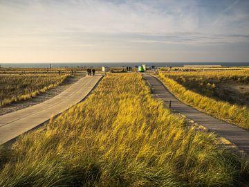 duinen en zee van Martijn Tilroe