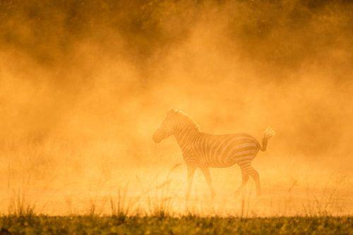 Gouden zebra