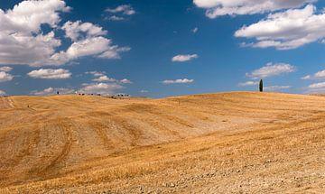 Eenzame Cipres - Toscane - Italie van Jeroen(JAC) de Jong