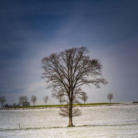 Just a tree van Wim van D