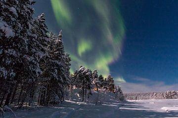 Noorderlicht von Rene Wolf