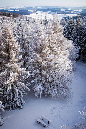 Besneeuwde bomen in vogelvlucht