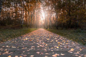 herfstzonsopgang aan de rand van het bos van Marc-Sven Kirsch