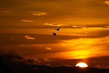 Twee eenden vliegen boven de ondergaande zon van Anne Ponsen