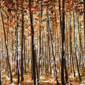 Rood herfstbos van Miranda van Hulst