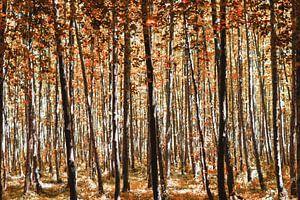 Forêt rouge d'automne sur Miranda van Hulst