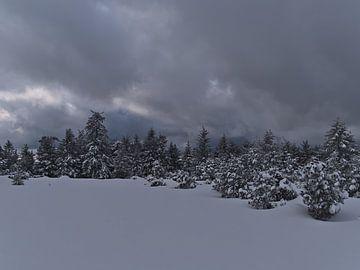 Winterlandschap met besneeuwde coniferen aan de rand van het bos met opkomende wolken van Timon Schneider
